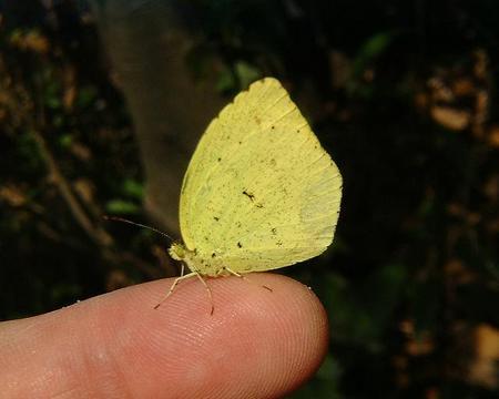 Butterfly50DSCF1105.JPG