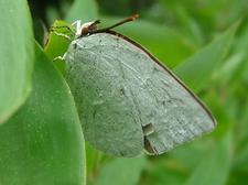 Butterfly50DSCF1885.JPG
