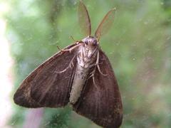 Moth1DSCF0268.JPG