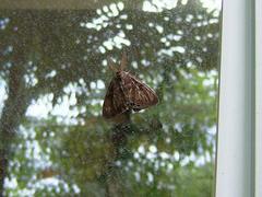 Moth2DSCF0269.JPG