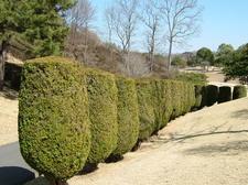 Topiaryleft
