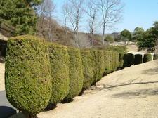 Topiaryright