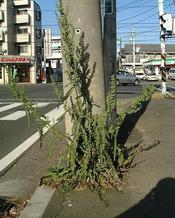 nagabagishigishi9050DSCF0762.JPG